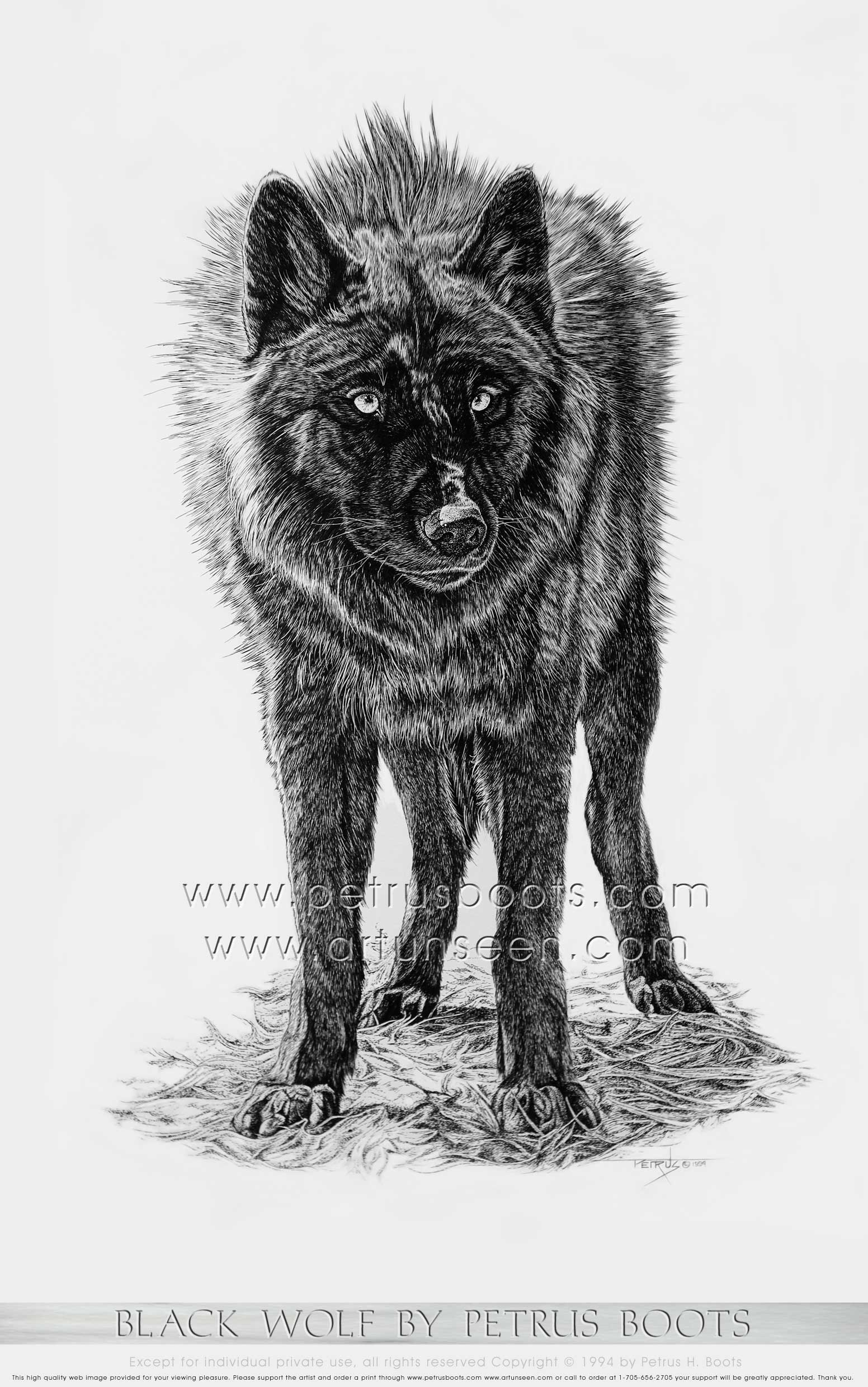 The Art of Petrus Boots ~ Black Wolf ~ Brush and India Ink